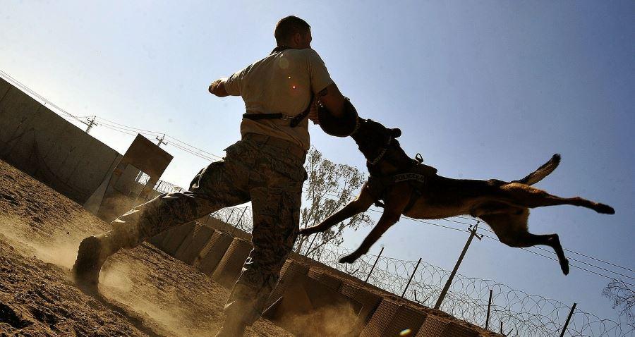 Animal Injuries - Dog Bite